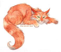 Cat_by_spocha
